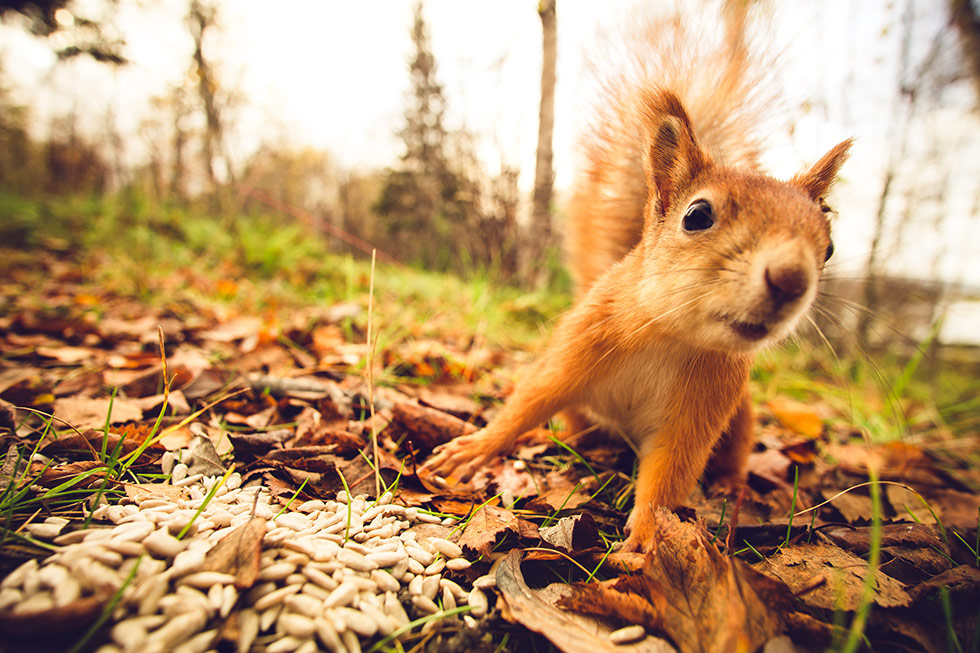 It's Squirrel Season…